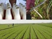 Haiti-agriculture