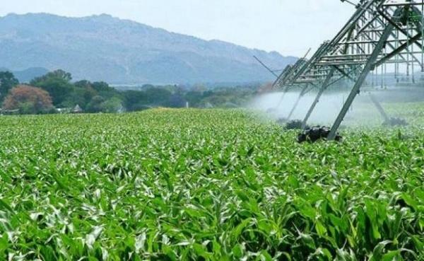 agriculture-algerie